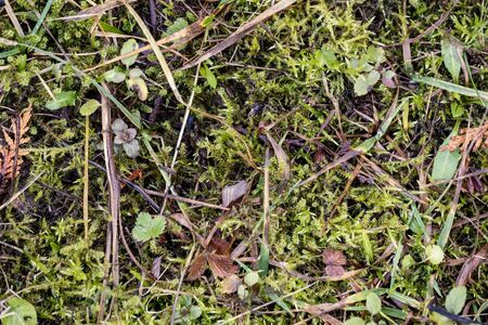nature abstract pattern texture with vegetation and small leaves on the ground