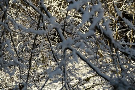 snow covered tree trunks and vegetation in abstract lush texture in winter 版權商用圖片