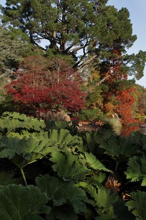 luxuriant: Dark, luxuriant foliage