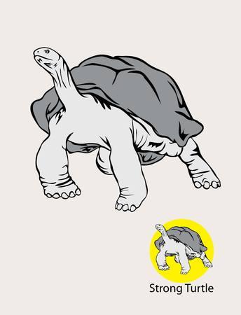 zoo amphibian: Turtle Logo, art vector design
