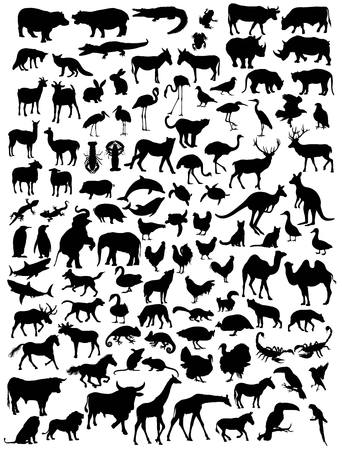 bull shark: Various types of animal silhouettes, art vector design