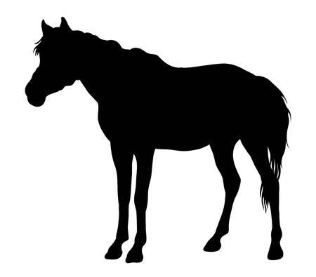 gallop: Horse Vector, Silhouette art design