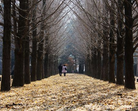 sonata: Lovers Lane