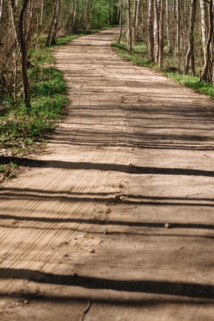 Country road through a spring birch forest with sand cover