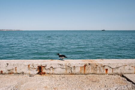 A crow sits on the seashore. The shore is reinforced with a concrete structure. In the distance cargo barges are visible. Clear blue sky and copy space