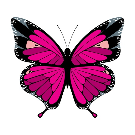stylized butterfly icon Stock Vector - 14257274