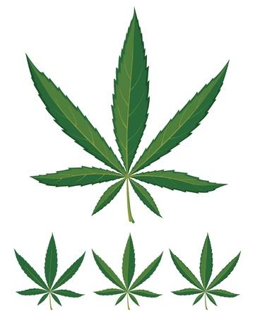 El cannabis deja sobre fondo blanco Ilustración de vector
