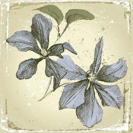 dessin au trait: dessin�s � la main fleurs de cl�matites dans le style r�tro