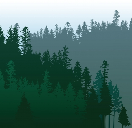 evergreen: caniferous forest