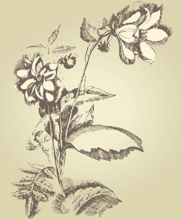 달리아: 손으로 그린 달리아 꽃 일러스트