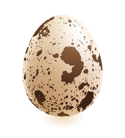 codorniz: huevo de codorniz