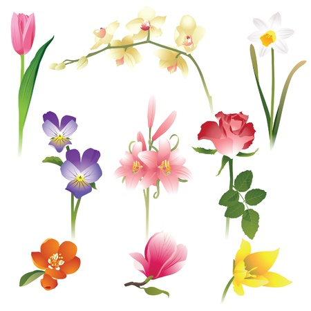 9 realistic flowers icons Vector