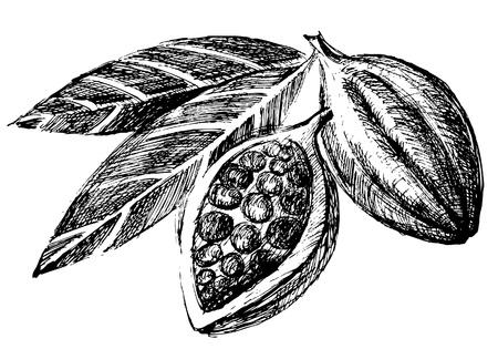 stylize: hand getekende cacaobonen Stock Illustratie