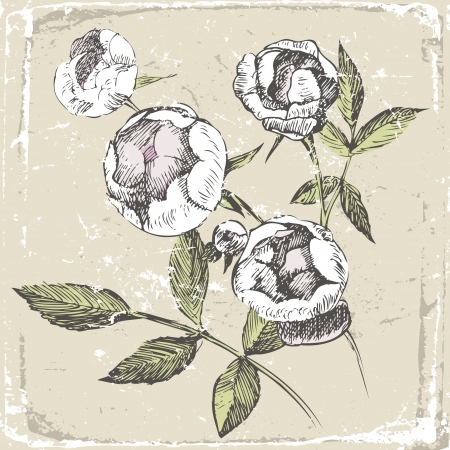 hand drawn roses in old-fashioned style Stock Vector - 13869729