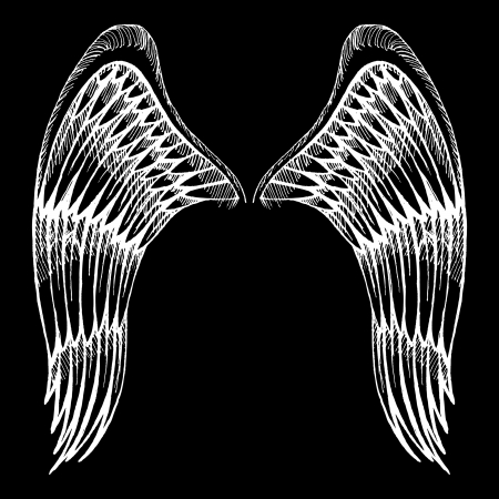 angel white: hand drawn wings Illustration