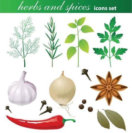 basil herb: Hierbas altamente detallados y los iconos de las especias establece