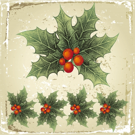 old fashioned christmas: hand drawn holly berry