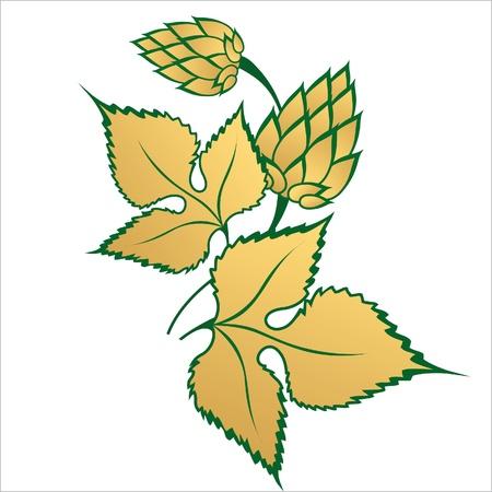 brewery  hops: golden hop branch Illustration