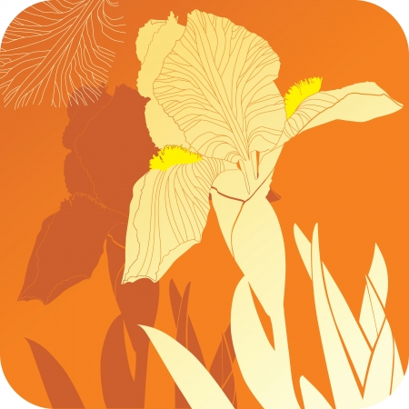 isolated irises: iris flower Illustration