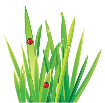 fresh grass with ladybirds Vector