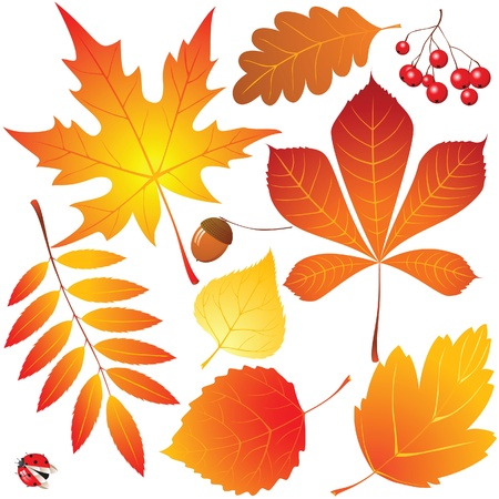 autumn leaves Stock Vector - 14270098
