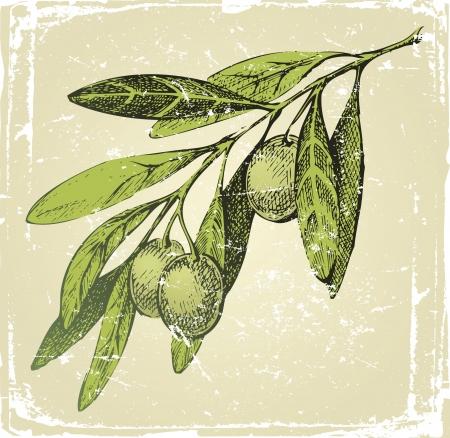 rama de olivo: dibujado a mano la rama de olivo