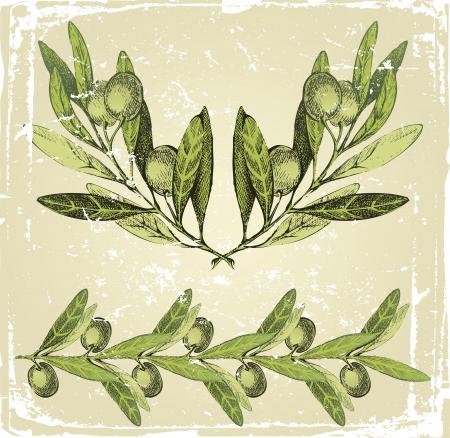 rama de olivo: dibujado a mano las ramas de olivo ornamental Vectores