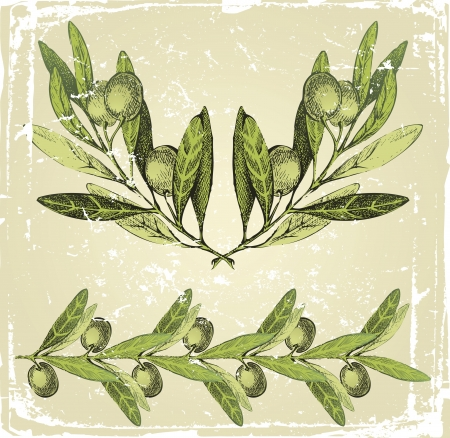 olive tree: hand drawn olive branches ornament
