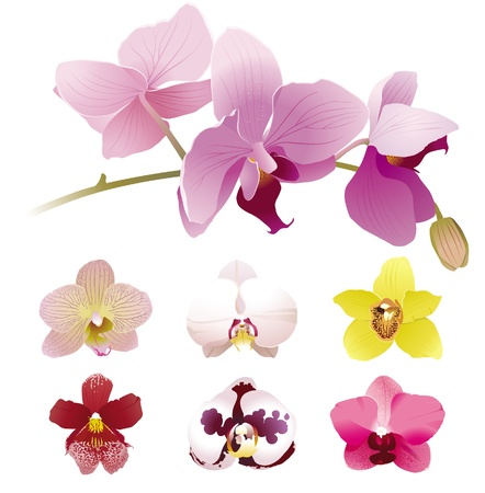 Realistic orchid flowers set. No meshes - only gradients! Stock Vector - 13869950