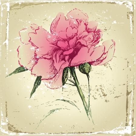 engraved image: retro-styled hand drawn peony flower