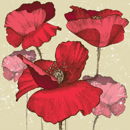 flower line: poppy flowers in vintage style