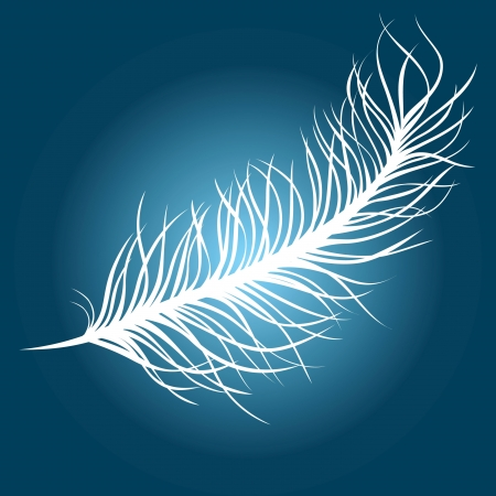 feather Stock Vector - 14270452