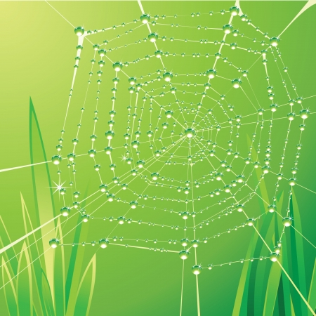 cobwebby: spider web over fresh green grass with water drops