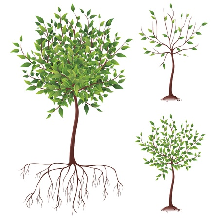 bush: realistic green tree with roots
