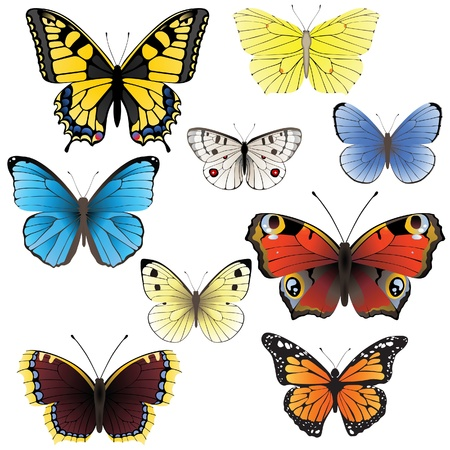 morpho: 9 highly detailed butterfly icons Illustration