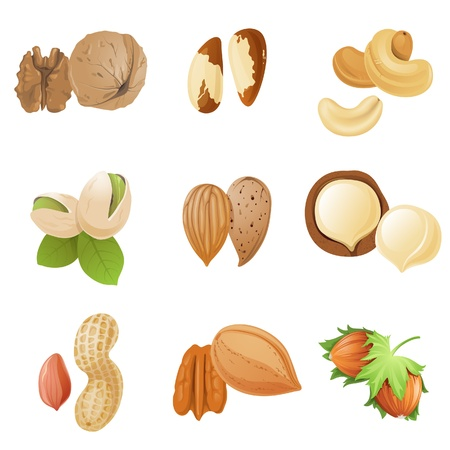 9 highly detailed nut icons Vector