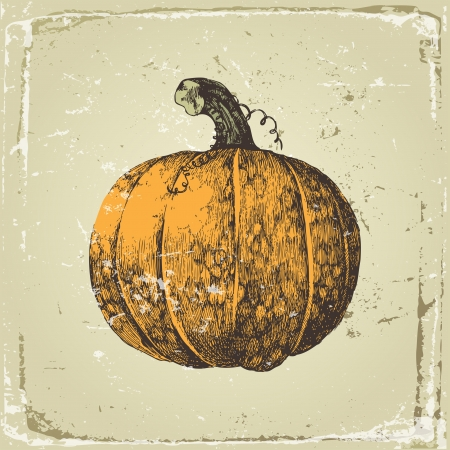 Hand drawn pumpkin in retro style Stock Vector - 15827312