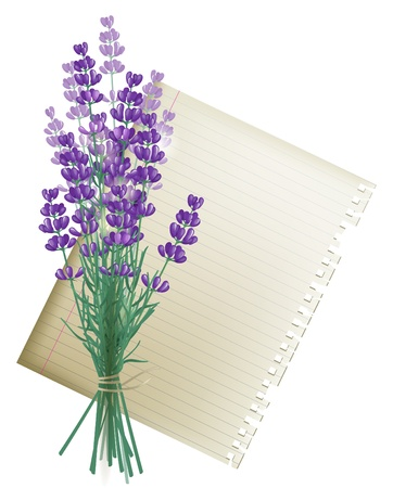 lavender coloured: Retro-styled background with lavender bunch and a leaf of paper