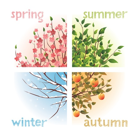 four season: 4 seasons in 1 tree