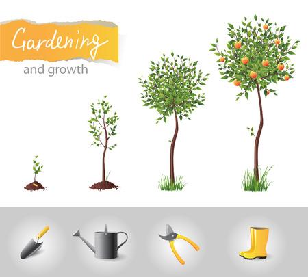 plants growing: Frutta albero che cresce e le icone di giardinaggio