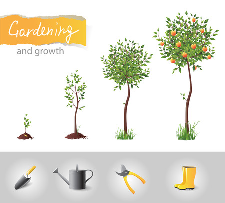 gardening equipment: Growing fruit tree and gardening icons  Illustration