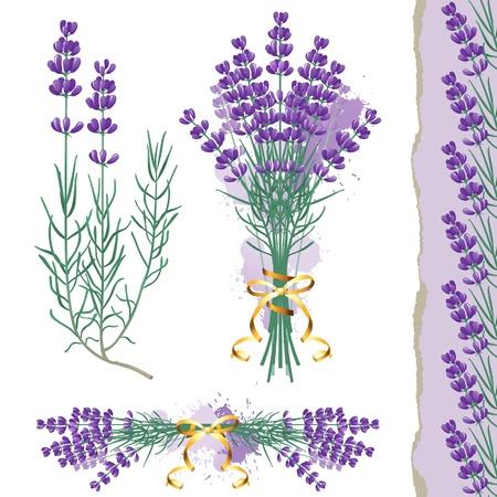 fiori di lavanda: Grande set con fiori di lavanda e di frontiera di lavanda senza soluzione di continuità Vettoriali