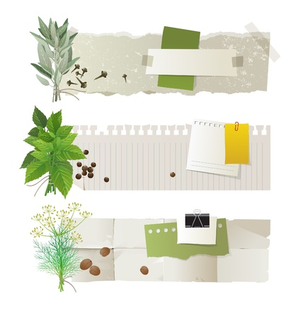 herb garden: Horizontal paper banners with herb bunches Illustration