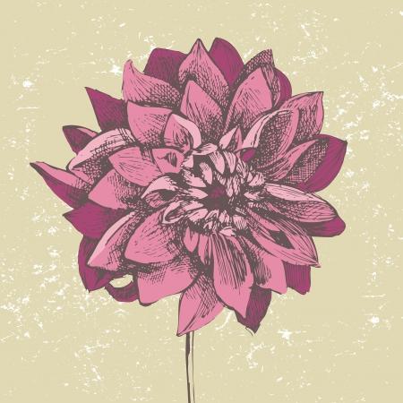 달리아: 손으로 그린 보라색 달리아 꽃
