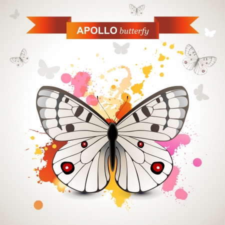 lepidoptera: Apollo butterfly over bright background