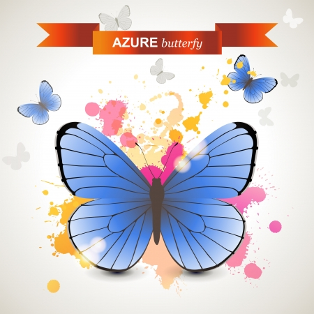 lepidoptera: Azure butterfly over bright background