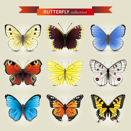 9 highly detailed butterfly icons Vector