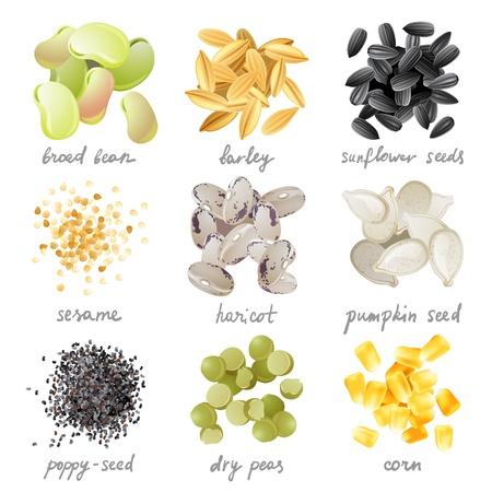 穀物、種および豆の偉大な非常に詳細な設定