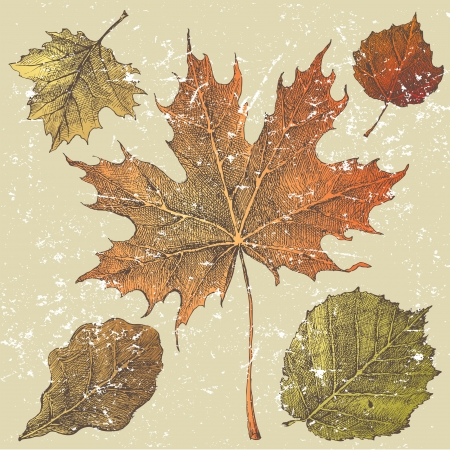 5 hand drawn autumn leaves Vector