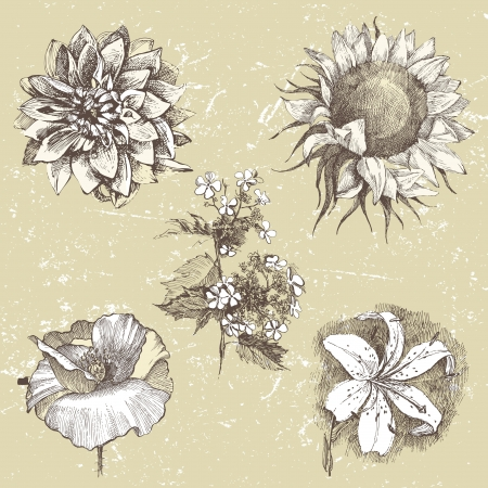engraved image: 5 highly detailed hand drawn flowers in retro style